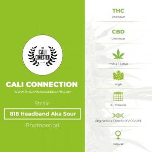 818 Headband Aka Sour OG Regular (Cali Connection) - The Cannabis Seedbank