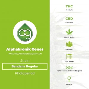 Bandana Regular (Alphakronik Genes) - The Cannabis Seedbank