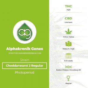 Cheddarwurst 2 Regular (Alphakronik Genes) - The Cannabis Seedbank