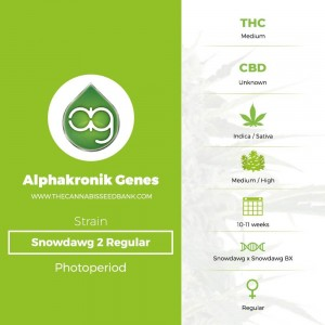 Snowdawg 2 Regular (Alphakronik Genes) - The Cannabis Seedbank