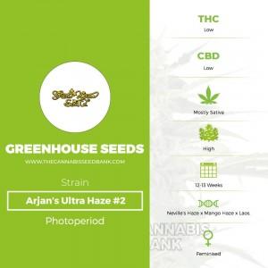 Arjan's Ultra Haze #2 (Greenhouse Seed Co.) - The Cannabis Seedbank