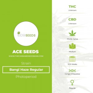 Bangi Haze Regular (Ace Seeds) - The Cannabis Seedbank