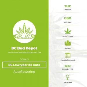 BC Lowryder #2 Auto (BC Bud Depot) - The Cannabis Seedbank