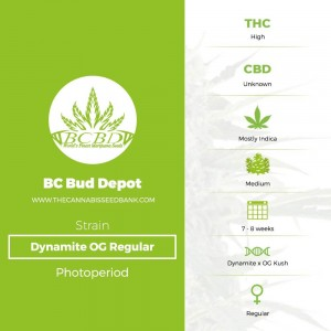 Dynamite OG Regular (BC Bud Depot) - The Cannabis Seedbank
