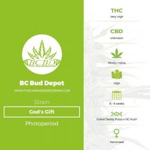 God's Gift (BC Bud Depot) - The Cannabis Seedbank