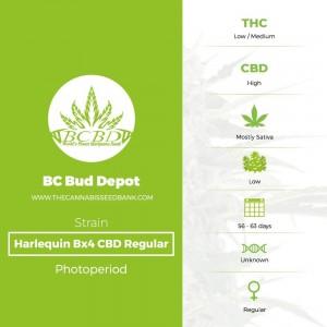 Harlequin Bx4 CBD Regular (BC Bud Depot) - The Cannabis Seedbank