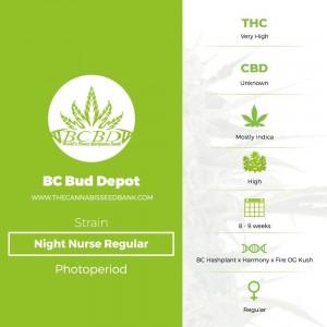 Night Nurse Regular (BC Bud Depot) - The Cannabis Seedbank