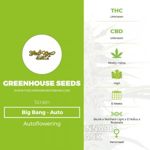 Big Bang Auto (Greenhouse Seed Co.) - The Cannabis Seedbank