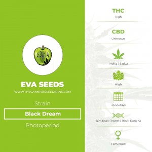 Black Dream (Eva Seeds) - The Cannabis Seedbank