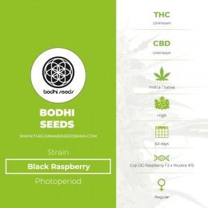Black Raspberry Regular (Bodhi Seeds) - The Cannabis Seedbank