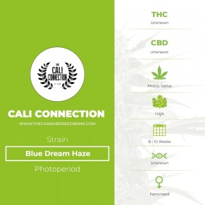 Blue Dream Haze (Cali Connection) - The Cannabis Seedbank