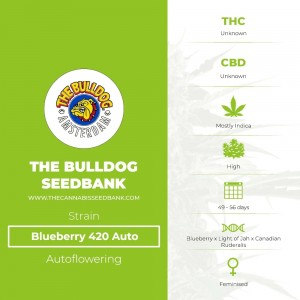 Blueberry 420 Auto (The Bulldog Seedbank) - The Cannabis Seedbank