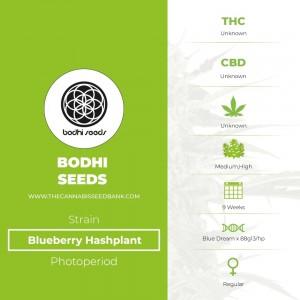 Blueberry Hashplant Regular (Bodhi Seeds) - The Cannabis Seedbank