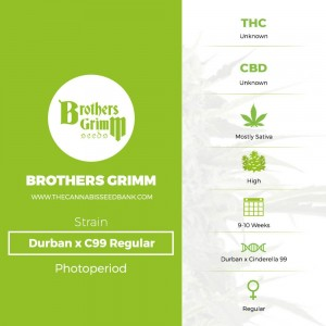 Durban x C99 Regular (Brothers Grimm Seeds) - The Cannabis Seedbank