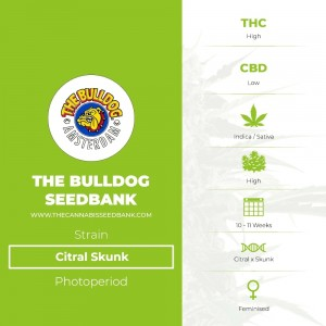 Citral Skunk (The Bulldog Seedbank) - The Cannabis Seedbank