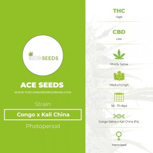 Congo x Kali China (Ace Seeds) - The Cannabis Seedbank