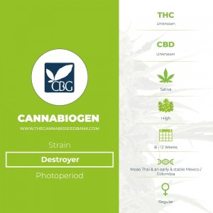 Destroyer Regular (Cannabiogen) - The Cannabis Seedbank