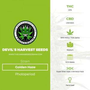 Golden Haze (Devils Harvest Seeds) - The Cannabis Seedbank