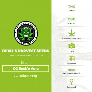 OG Reek'n Auto (Devils Harvest Seeds) - The Cannabis Seedbank