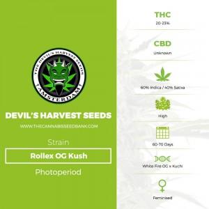 Rollex OG Kush (Devils Harvest Seeds) - The Cannabis Seedbank