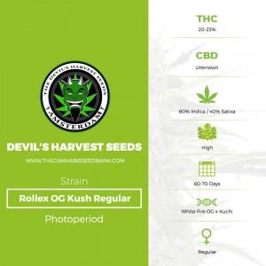 Rollex OG Kush Regular (Devils Harvest Seeds) - The Cannabis Seedbank