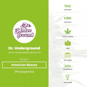 American Beauty (Dr Underground) - The Cannabis Seedbank