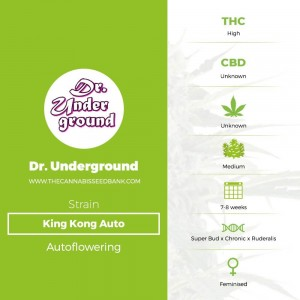 King Kong Auto (Dr Underground) - The Cannabis Seedbank