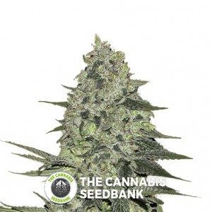 Blackberry Autoflowering Feminised FastBuds Seeds