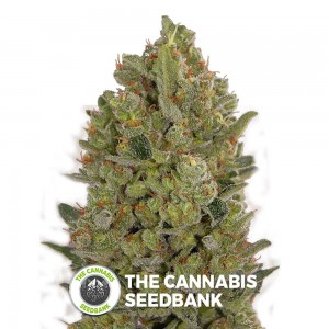 Female Collection #3 (00 Seeds) - The Cannabis Seedbank