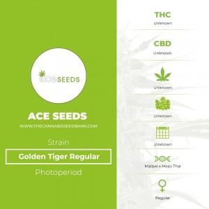 Golden Tiger Regular (Ace Seeds) - The Cannabis Seedbank