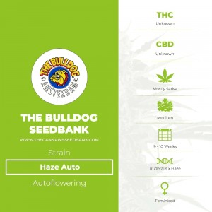 Haze Auto (The Bulldog Seedbank) - The Cannabis Seedbank