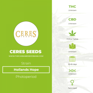 Hollands Hope (Ceres Seeds) - The Cannabis Seedbank