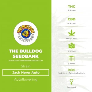 Jack Herer Auto (The Bulldog Seedbank) - The Cannabis Seedbank