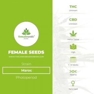 Maroc (Female Seeds) - The Cannabis Seedbank