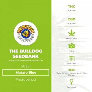Mataro Blue (The Bulldog Seedbank) - The Cannabis Seedbank