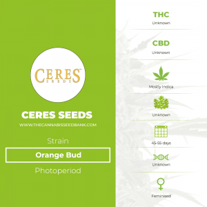 Orange Bud (Ceres Seeds) - The Cannabis Seedbank