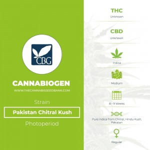Pakistan Chitral Kush Regular (Cannabiogen) - The Cannabis Seedbank