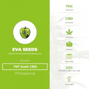 TNT Kush CBD (Eva Seeds) - The Cannabis Seedbank