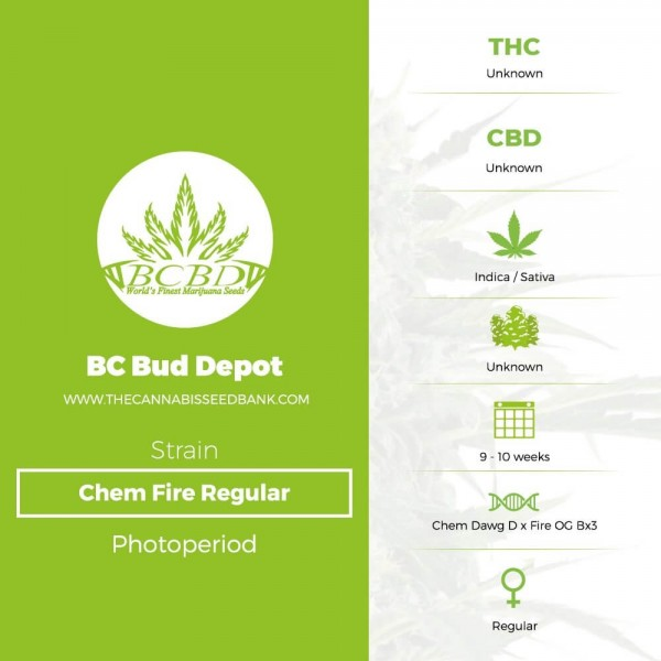 Chem Fire Regular (BC Bud Depot) - The Cannabis Seedbank