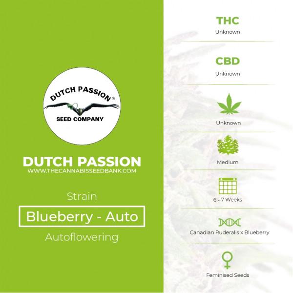 Auto Blueberry - Autoflowering - Dutch Passion - Characteristics