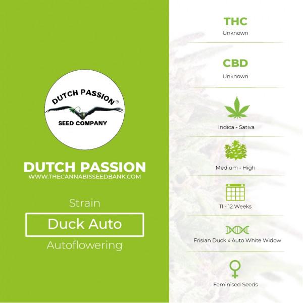 Auto Duck - Autoflowering - Dutch Passion - Characteristics