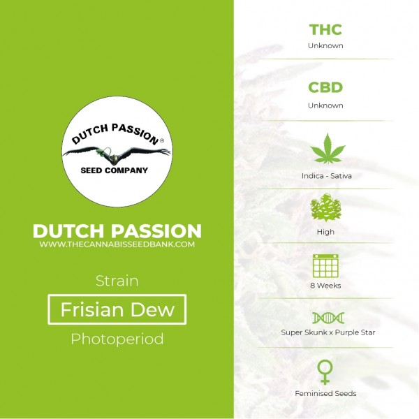 Frisian Dew - Feminised - Dutch Passion - Characteristics