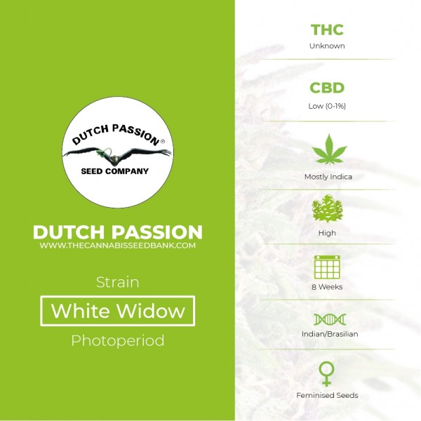 White Widow - Feminised - Dutch Passion - Characteristics