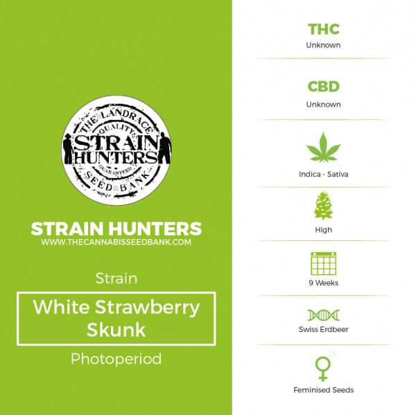 White Strawberry Skunk - Feminised - Strain Hunters - Characteristics