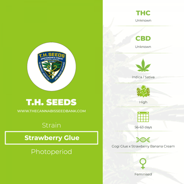 Strawberry Glue (T.H. Seeds) - The Cannabis Seedbank
